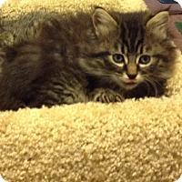 Adopt A Pet :: Fuzzy Wuzzy - Eureka, CA
