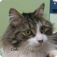 Adopt A Pet :: Cody - Warren, PA