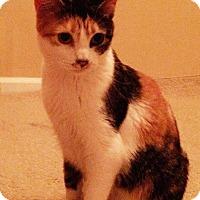 Adopt A Pet :: Honey - Granite City, IL