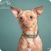 Adopt A Pet :: Herbie - Chandler, AZ
