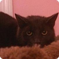 Adopt A Pet :: Tink - Pittstown, NJ
