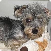Adopt A Pet :: Isaac 3 pounds - Greenville, RI