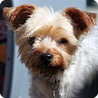 Adopt A Pet :: Odie - Lynnwood, WA