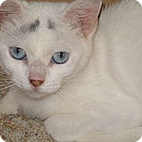 Adopt A Pet :: Baby Face - Riverhead, NY