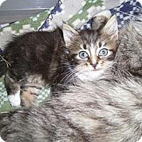 Adopt A Pet :: Brady - Reston, VA