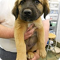 Adopt A Pet :: TRACK - Southampton, PA
