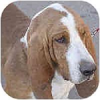 Adopt A Pet :: Freddie - Phoenix, AZ