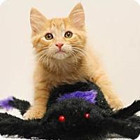 Adopt A Pet :: Geraldine - Sacramento, CA