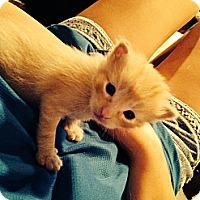 Adopt A Pet :: Titan - Edmonton, AB