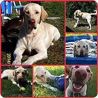 Adopt A Pet :: LENNY - Davenport, FL