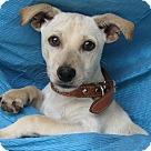 Adopt A Pet :: Coal Reed
