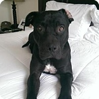 Adopt A Pet :: MARLEY (Courtesy Post) - LOS ANGELES, CA