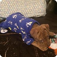 Adopt A Pet :: Kraken - El Cajon, CA