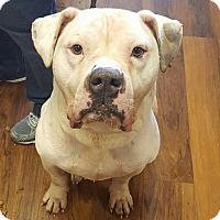 Adopt A Pet :: Wrigley - Hollywood, MD