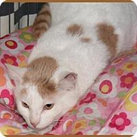 Adopt A Pet :: Rascal - Milwaukee, WI