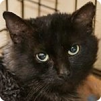 Adopt A Pet :: Rumple - Medford, MA