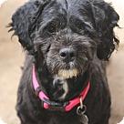 Adopt A Pet :: Chyna