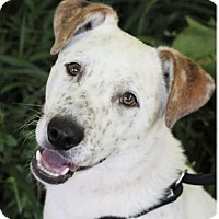Adopt A Pet :: SPROCKET - Red Bluff, CA