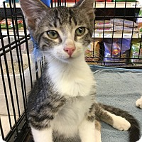 Adopt A Pet :: Mars - Gilbert, AZ