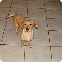 Adopt A Pet :: Butterscotch - Oviedo, FL