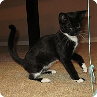 Adopt A Pet :: Jinga - Colorado Springs, CO