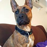 Adopt A Pet :: Bronx - Columbus, OH