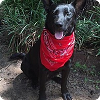 Adopt A Pet :: Annabelle - Kaufman, TX