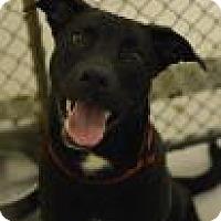 Adopt A Pet :: Frank - Aiken, SC