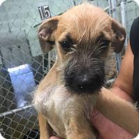 Adopt A Pet :: Emo - chicago, IL