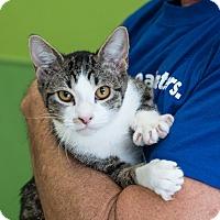 Adopt A Pet :: Campari - Houston, TX