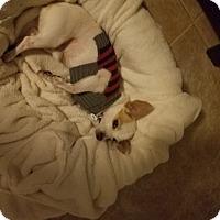 Adopt A Pet :: Charlie - Goodyear, AZ