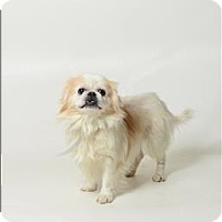 Adopt A Pet :: Daisy - Columbus, OH