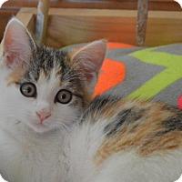Adopt A Pet :: Lily - Carlisle, PA