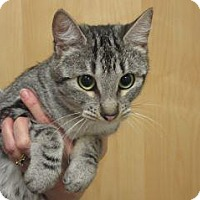 Adopt A Pet :: Poppy - Wildomar, CA
