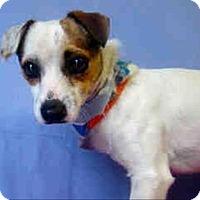 Adopt A Pet :: Lucas - Encino, CA