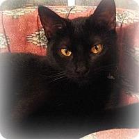 Adopt A Pet :: Luna - Ocean Springs, MS
