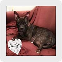 Adopt A Pet :: Adara - Des Moines, IA