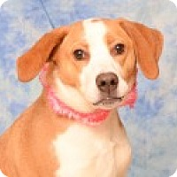 Adopt A Pet :: Ginger - Pittsboro, NC