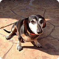 Adopt A Pet :: Ollie - N - Huntington, NY