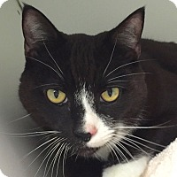 Adopt A Pet :: Roxy - Norwalk, CT