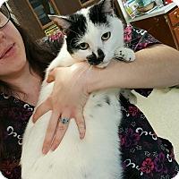 Adopt A Pet :: Pongo - Ashland, OH