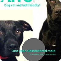 Adopt A Pet :: Arro - Des Moines, IA