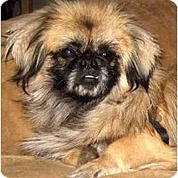 Adopt A Pet :: Neazy - Mays Landing, NJ
