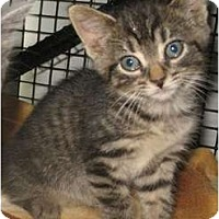 Adopt A Pet :: Anita - Acme, PA