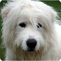 Adopt A Pet :: Duke - URGENT - Providence, RI