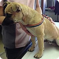 Adopt A Pet :: Papi - Stilwell, OK