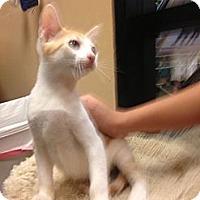 Adopt A Pet :: Saffron - Woodstock, GA