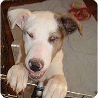 Adopt A Pet :: Dory - Allentown, PA