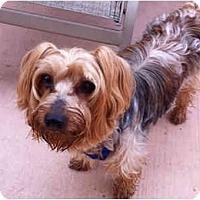 Adopt A Pet :: Harley - Homestead, FL