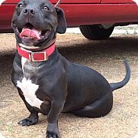 Adopt A Pet :: Jonsey - Van Nuys, CA